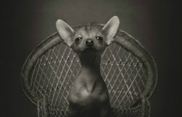 Boca do Lobo, Design lovers, Design news, Luxury Interiors, Luxury Furniture, Luxury Lifestyle  Vincent Lagrange expressive animals 5 Animal Portraits  vincent Lagrange yatzer